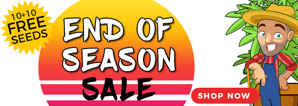 End Of Season Marijuana Seeds Sale