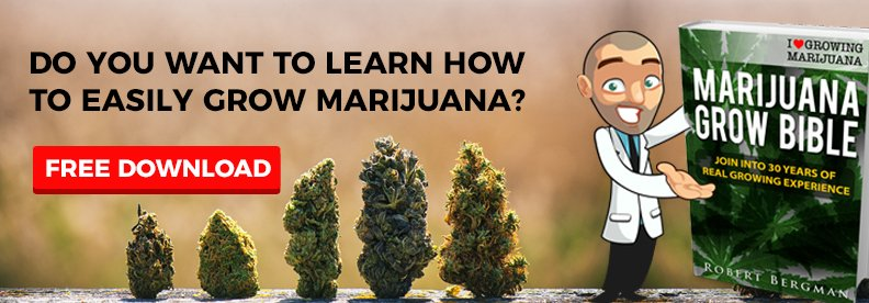 Free guide to growing your own marijuana