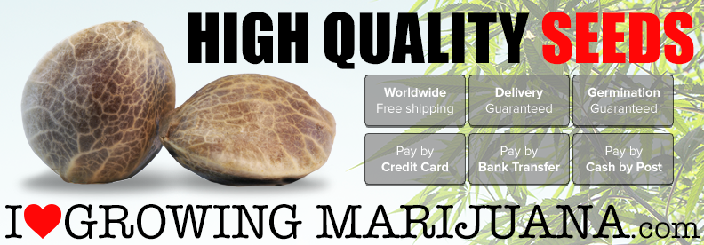 Buy Marijuana Seeds Online - USA shipping